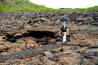 Daniel Orellana of the Charles Darwin Foundation crossesa rocky lava field to reach an land iguana restoration area inBahia Cartago, Isabela island. Bahia Cartago is a protectedarea ­ not accessible t